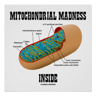 Mitochondrial Madness Inside Mitochondrion Biology Poster