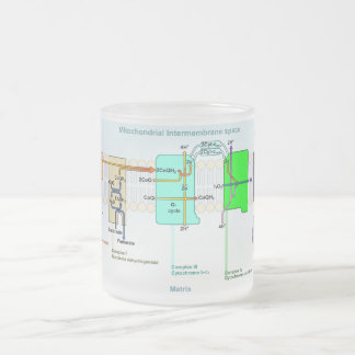 Mitonchondrial Intermembrane Space Diagram 10 Oz Frosted Glass Coffee Mug