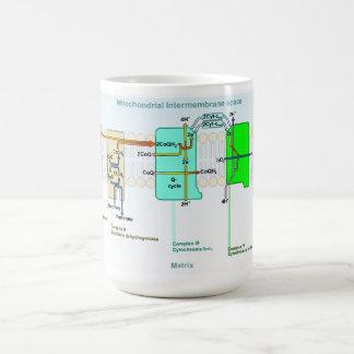 Mitonchondrial Intermembrane Space Diagram Classic White Coffee Mug