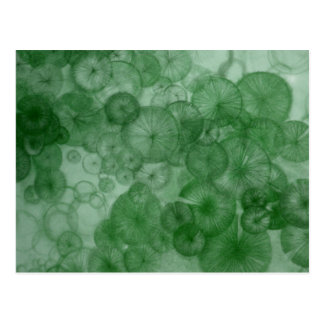 Mitosis (green) as seen in RipRap Journal Postcard