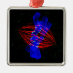 Mitotic Metaphase Christmas Tree Ornament