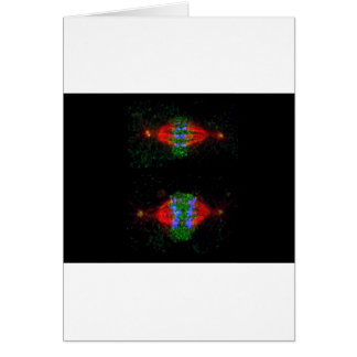 Mitotic metaphase (upper) and anaphase (lower) greeting card