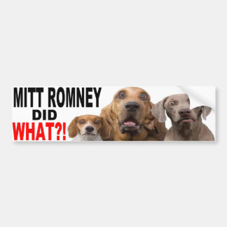 MITT ROMNEY DID WHAT?! Dog On Roof BUMPER STICKER