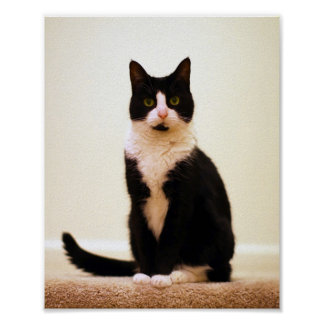 Mitten the Cat Poster