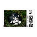 """Mittens"" cat rock stamp"