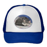 Mittens Kitten Hat