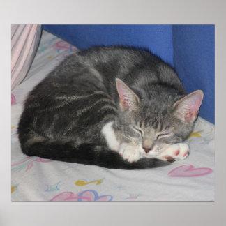 MIttens Kitten Sq Nap Print