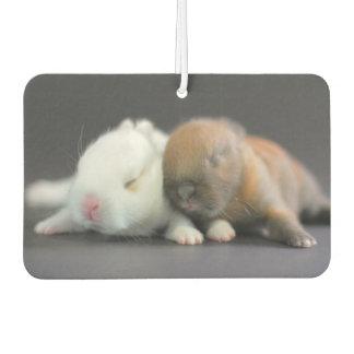 Mix breed of Netherland Dwarf Rabbits Car Air Freshener