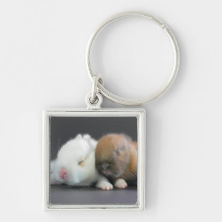 Mix breed of Netherland Dwarf Rabbits Keychain