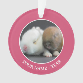 Mix breed of Netherland Dwarf Rabbits Ornament