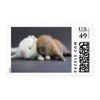Mix breed of Netherland Dwarf Rabbits Postage Stamp