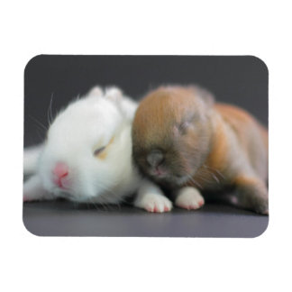 Mix breed of Netherland Dwarf Rabbits Rectangular Photo Magnet