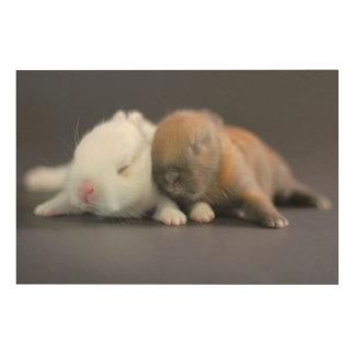 Mix breed of Netherland Dwarf Rabbits Wood Wall Art