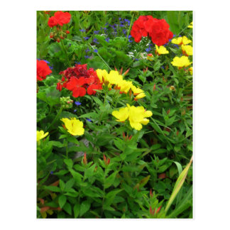 Mixed Blooms Olympia Farmer' s Market Garden Postcard