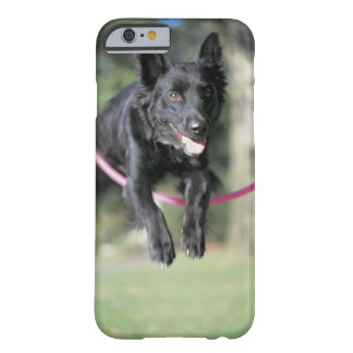 Mixed Border Collie Barely There iPhone 6 Case