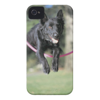 Mixed Border Collie iPhone 4 Case