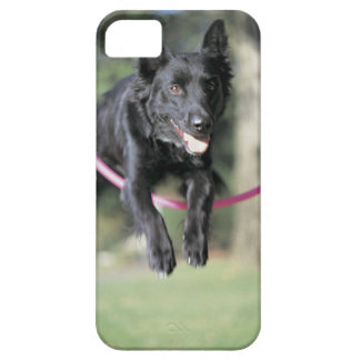 Mixed Border Collie iPhone SE/5/5s Case