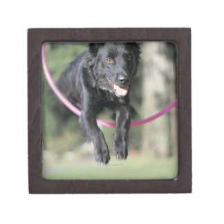 Mixed Border Collie Jewelry Box