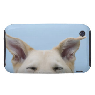 Mixed-breed dog, close-up on head and ears tough iPhone 3 covers