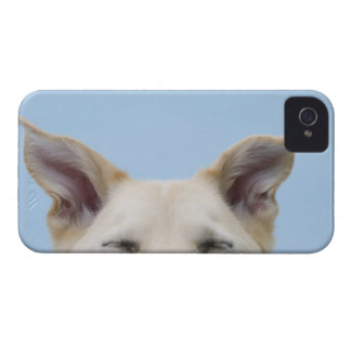 Mixed-breed dog, close-up on head and ears Case-Mate iPhone 4 cases