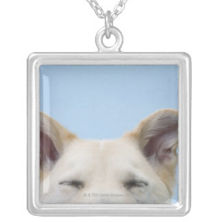 Mixed-breed dog, close-up on head and ears silver plated necklace