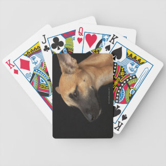 Mixed breed dog looking to the left on black bicycle playing cards