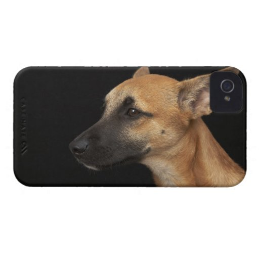 Mixed breed dog looking to the left on black Case-Mate iPhone 4 cases