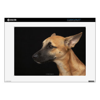 Mixed breed dog looking to the left on black laptop decals