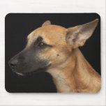 Mixed breed dog looking to the left on black mouse pad