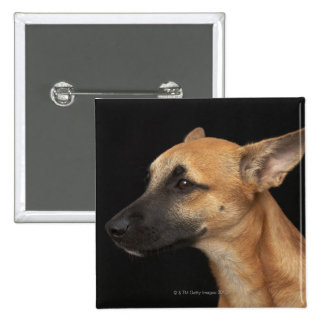 Mixed breed dog looking to the left on black pinback button