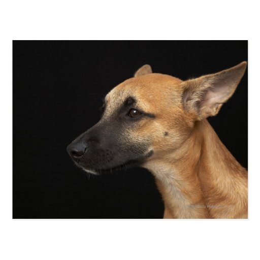 Mixed breed dog looking to the left on black postcard