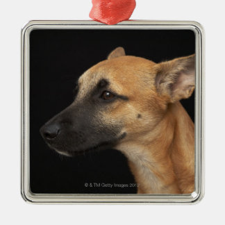 Mixed breed dog looking to the left on black square metal christmas ornament