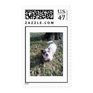 Mixed-breed dog postage