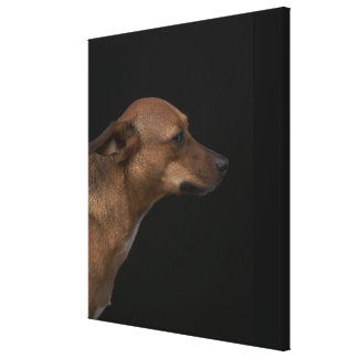 Mixed breed dog profile on black background canvas print