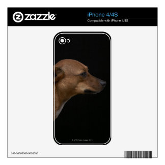 Mixed breed dog profile on black background decals for the iPhone 4