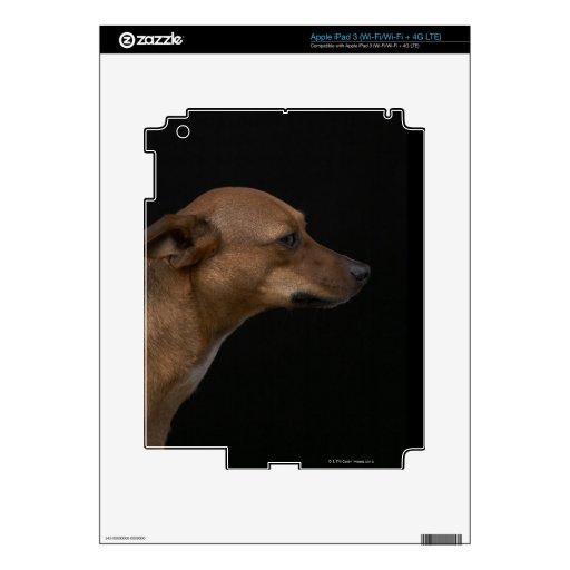 Mixed breed dog profile on black background iPad 3 skins