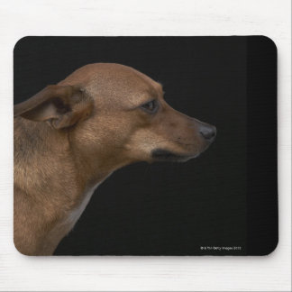 Mixed breed dog profile on black background mouse pad