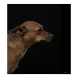 Mixed breed dog profile on black background poster