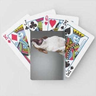Mixed breed dog yawning bicycle playing cards