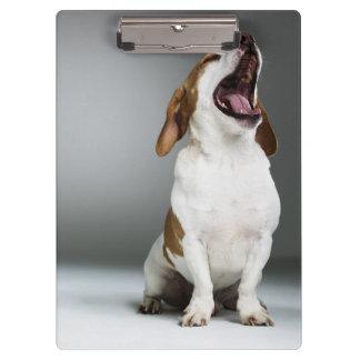 Mixed breed dog yawning clipboard