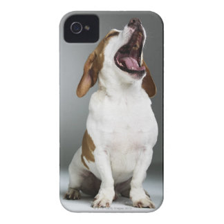 Mixed breed dog yawning, close-up iPhone 4 covers