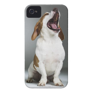 Mixed breed dog yawning, close-up iPhone 4 Case-Mate cases