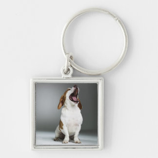 Mixed breed dog yawning, close-up keychain