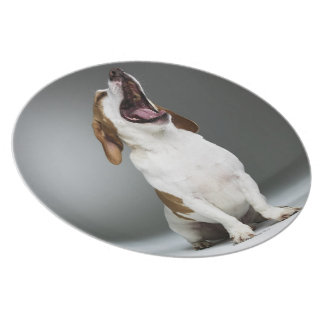 Mixed breed dog yawning, close-up dinner plate