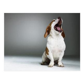 Mixed breed dog yawning post card