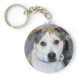 Mixed-Breed Pitbull/Yellow Labrador Keychain