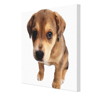 Mixed-Breed Puppy Canvas Print