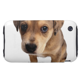 Mixed-Breed Puppy Tough iPhone 3 Cases