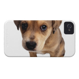 Mixed-Breed Puppy iPhone 4 Case-Mate Cases