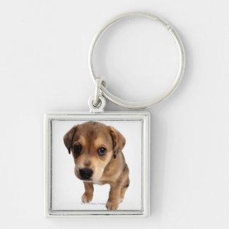 Mixed-Breed Puppy Keychain